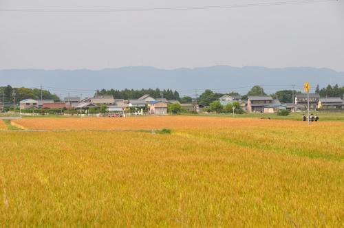 麦畑の帰り道