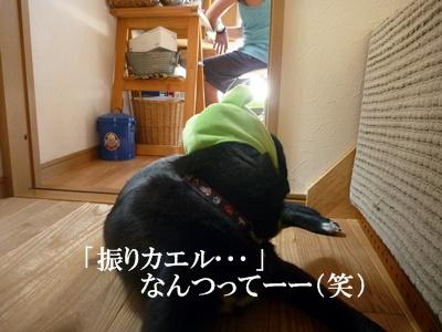 ★P1070486⑤