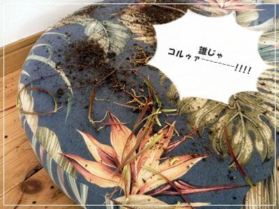 ○P1100279