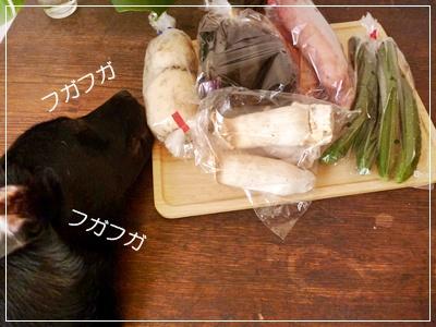 ■P1100886