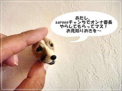 ●P1120118