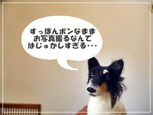 ☆P1120231