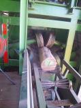 ciricote 001