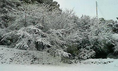 雪景色(2010.12.31)