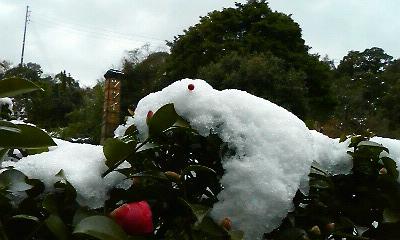 雪うさぎ2(2011.01.01)