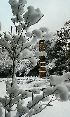 雪の華2(2010.12.31)