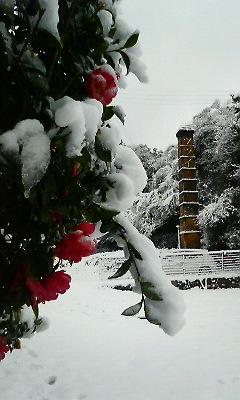 雪の華3(2010.12.31)