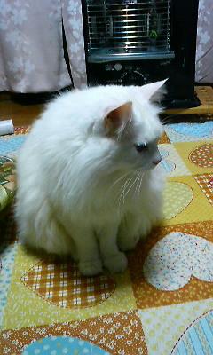 みーたん1(2011.01.19)