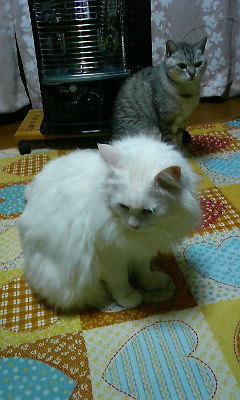 みーたん2(2011.01.19)