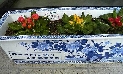 有田焼プランターの小花たち(2011.02.06撮影)