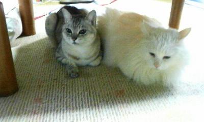 ごんちゃんとみーたん(2011.02.12)