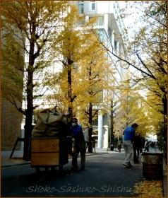 20131214 早稲田 2 銀杏