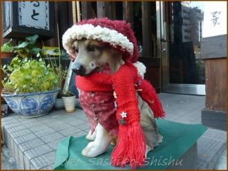 20131224 犬 1 クリスマス飾り