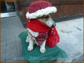 20131224 犬 2 クリスマス飾り