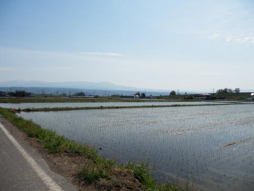田んぼと蓼科山2