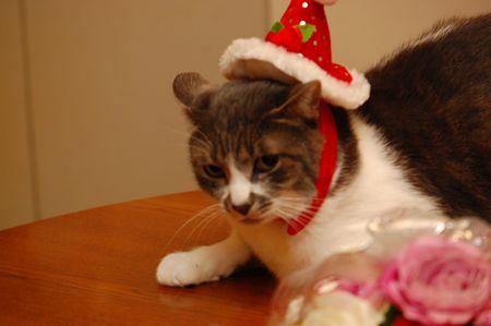 20131225クリスマス2