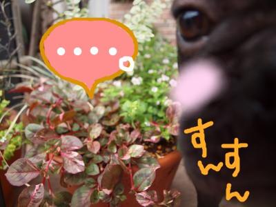 花と茂男2