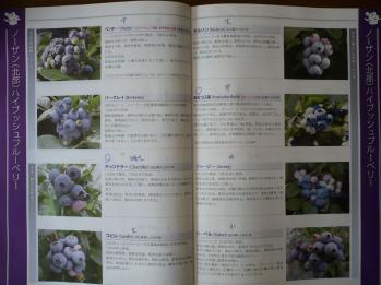 2011-2.3 001大関中身