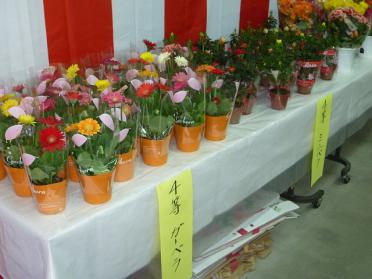 20120406_hana_002.jpg