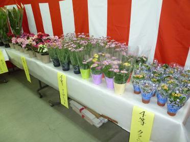 20120406_hana_006.jpg