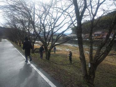 sakura_teire2012_003.jpg