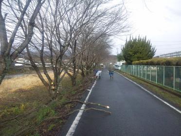 sakura_teire2012_004.jpg