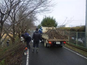 sakura_teire2012_005.jpg