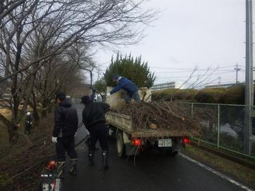 sakura_teire2012_006.jpg