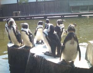 05 ペンギンもいます.jpg
