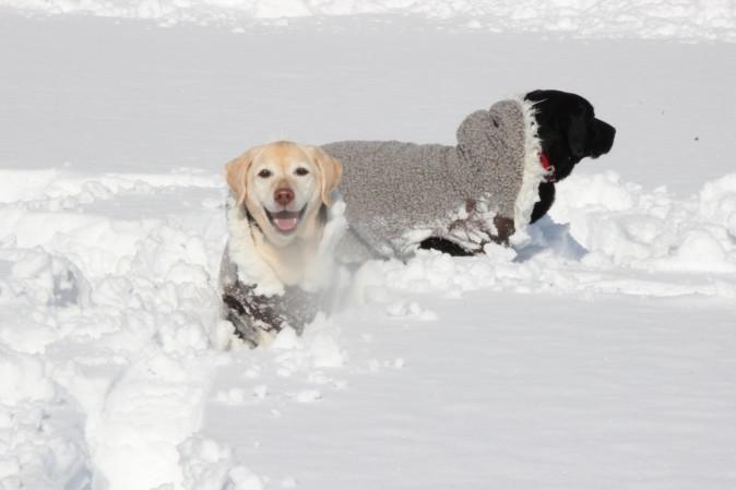 初雪あそび!③