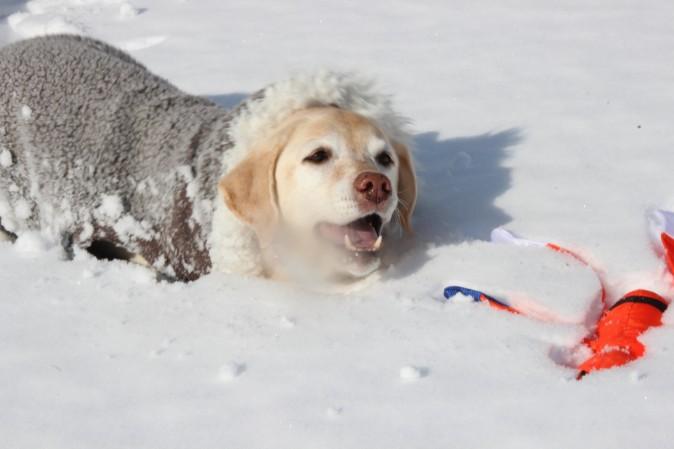 初雪あそび!②