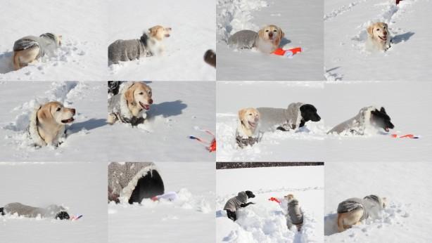 初雪あそび!①