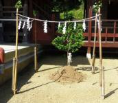 金蛇水神社16