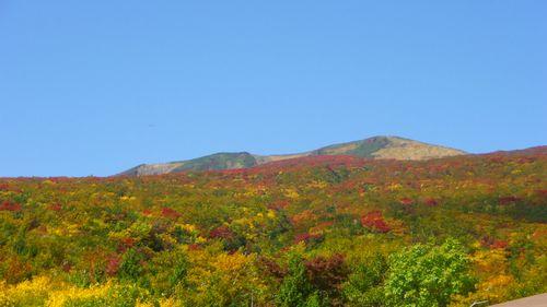 栗駒山2011紅葉10