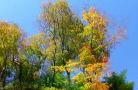 七ヶ宿滑津大滝12紅葉