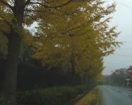 紅葉2011泉ヶ岳9