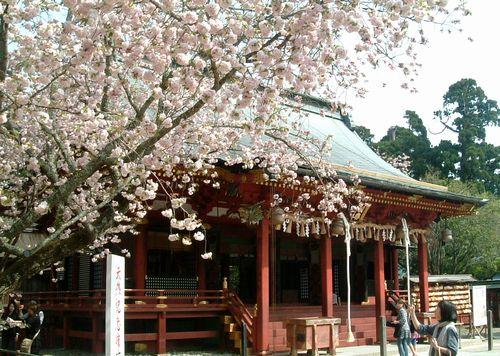 塩釜神社2010桜2