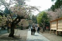 塩釜神社2010桜5