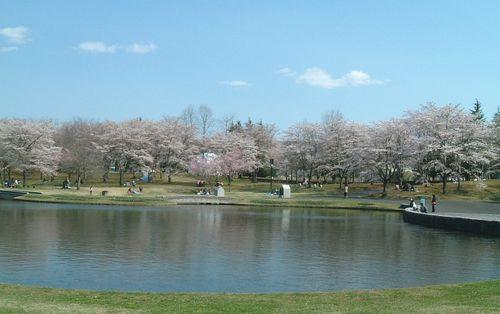 みちのく公園2010桜1
