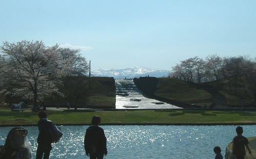 みちのく公園2010桜5
