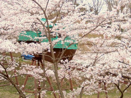 花見2008船岡城跡公園3スロープカー