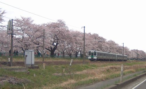 花見2008船岡城跡公園5東北本線