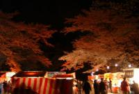夜桜2009船岡城跡公園1