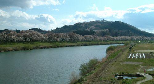 花見2010船岡白石川1