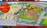 桜2012西公園4