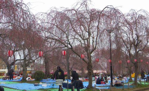 桜2012榴岡公園1