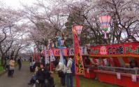 桜花見2012白石城6