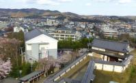 桜花見2012白石城9