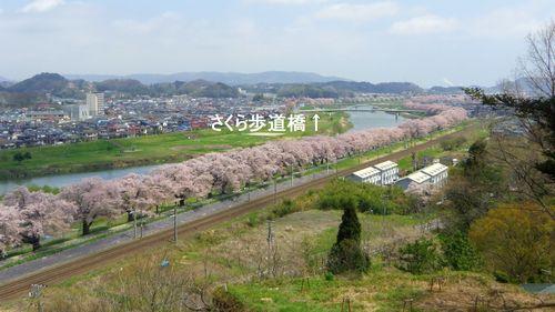 桜2012白石川堤3