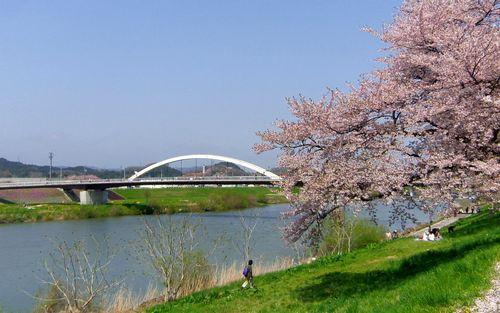 桜2012白石川堤6さくら橋